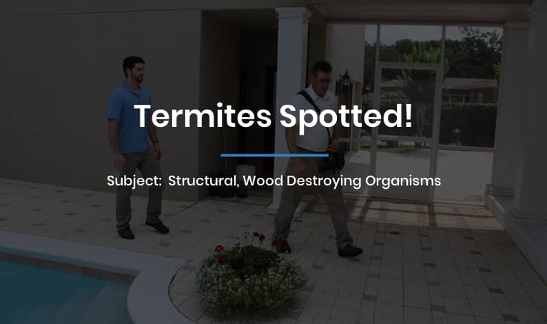 Termites Spotted!