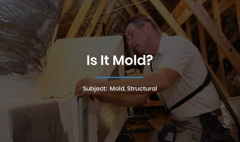 Is It Mold?