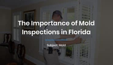 The Importance of Mold Inspections in Florida