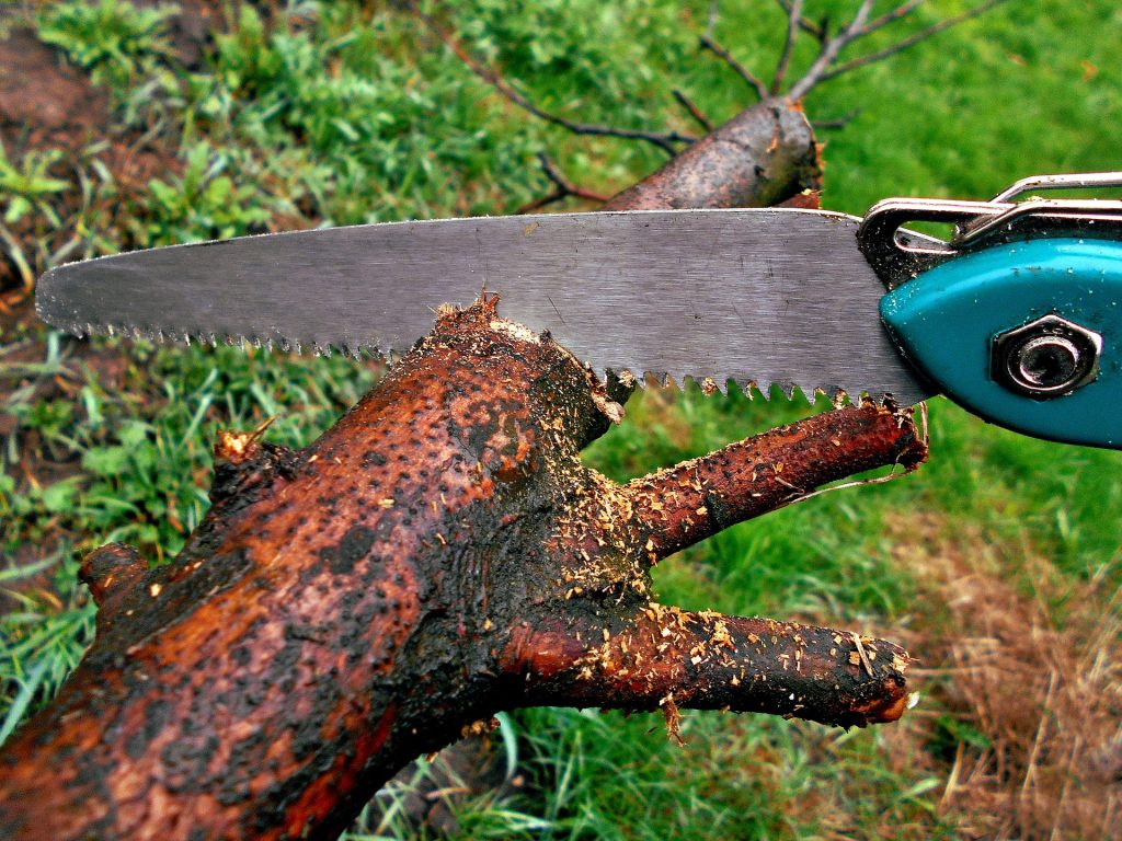 Trim any loose or overhanging branches before hurricane season starts.